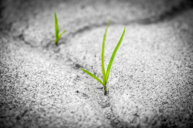 Crecimiento personal: ¿estás conectado con el presente?